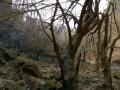 Stone Cove & Burgess Falls 103