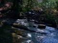 Clear Creek 007