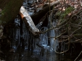 Clear Creek 023
