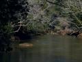 Clear Creek 2-26-14 020-1
