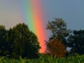 Rainbow & Late Evening Sun 001