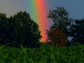 Rainbow & Late Evening Sun 002