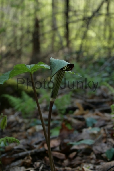 Wild Flowers foCliffty 009