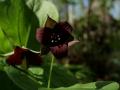 Wild Flowers foCliffty 001