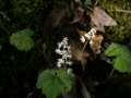 Wild Flowers foCliffty 002