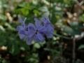 Wild Flowers foCliffty 028